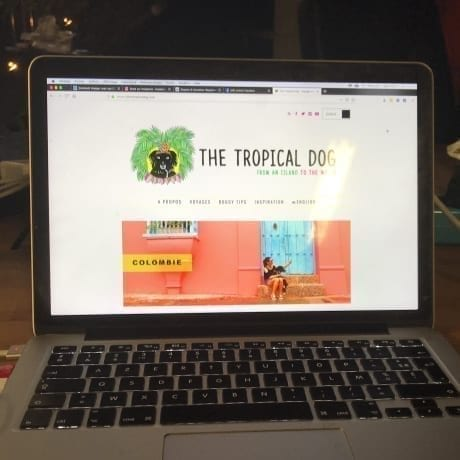 Site The Tropical Dog